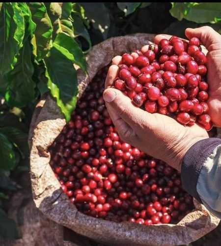italian-artisan-coffee_coffee-beans
